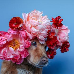 Oversized Flower Crown