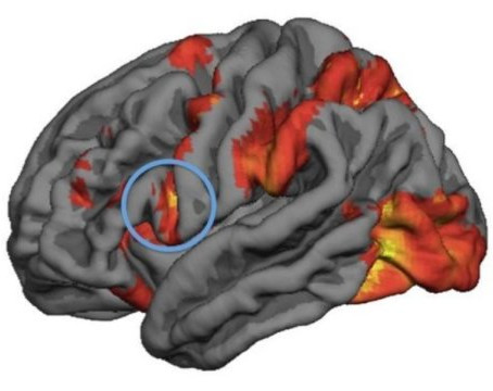 Ayna Nöron Aktivitesiyle Ahlaki İkilemlerdeki Olası Davranışlar Tahmin Edilebiliyor