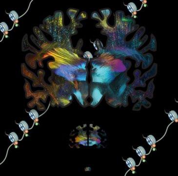 İnsan Beyninin Evrimleşme Sürecinde Oluşan Genetik Değişimler