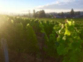 vignes de saintecroix du mont au soleil couchant vignobles ricard