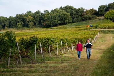 Checking on the vineyard