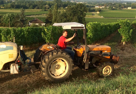 Philippe taking care of his vines