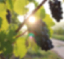 Photo - Wine Investment.jpg