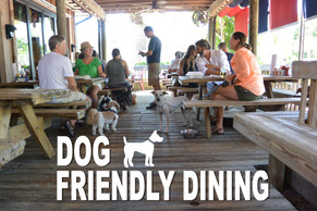 My favorite places to bring dogs to dine!