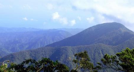 The Jamaica Blue Mountain® Coffee