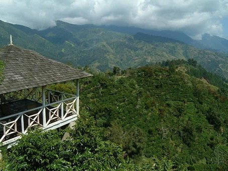 5 Things You Must Know About the Exotic Jamaica Blue Mountain Coffee