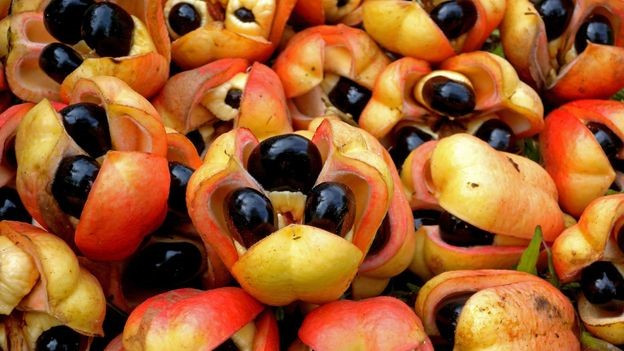 Ackee was originally imported from West Africa in 1778 and was probably brought here in a slave ship.