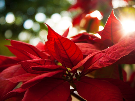 How to Celebrate Christmas in Jamaica