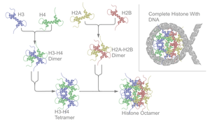 File:Nucleosome structure.png