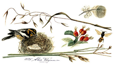 Sparrow And Rosehips