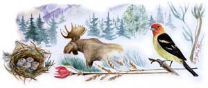 Moose and Tanager