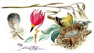 Goldfinch and Shooting Star