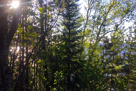 Birch Lake through the Trees.jpg