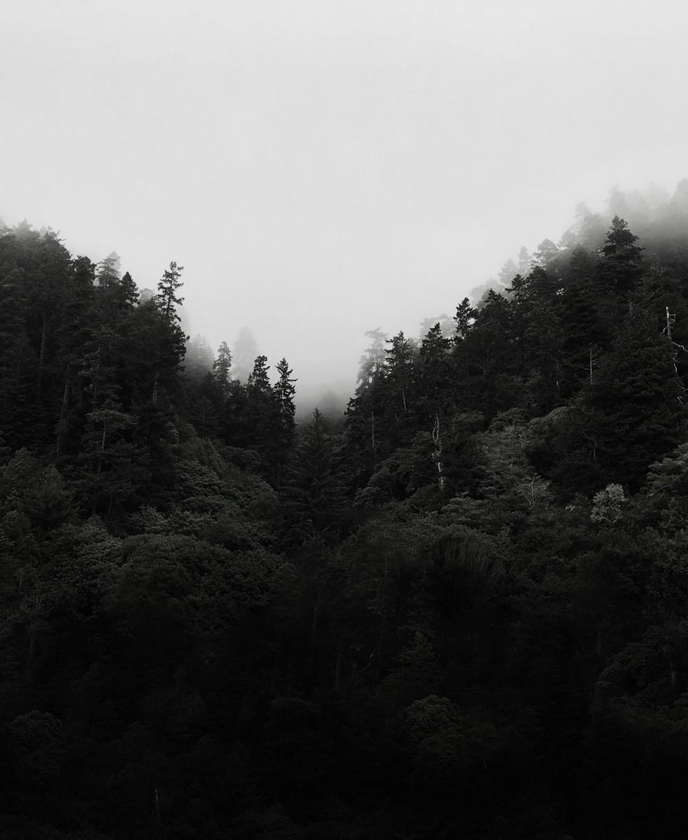 Trees and Mist.jpg