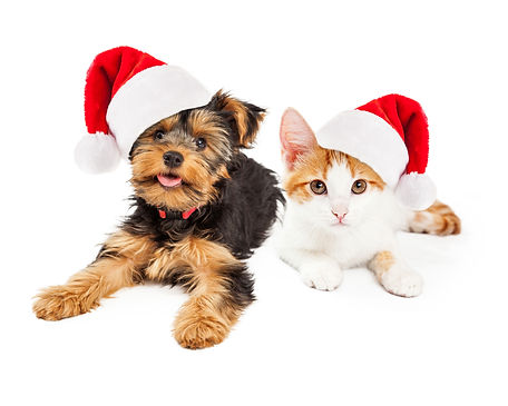 Christmas_Kitten_and_Puppy_original.jpg