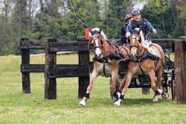 רתמות - לזוג סוסים