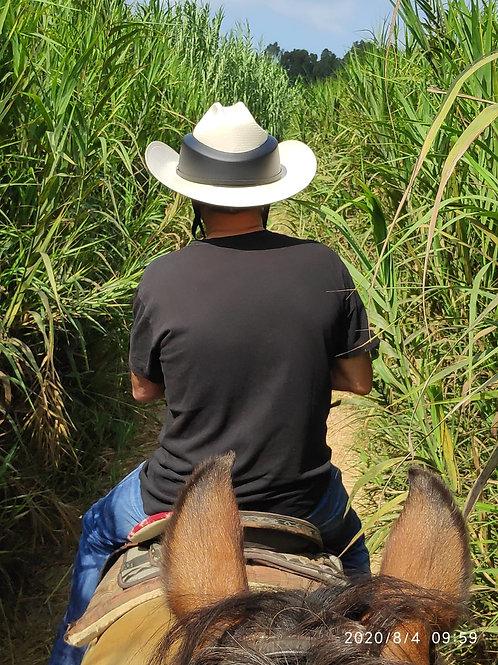 כובע קסדה