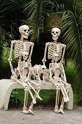 skeleton creative writing contest Parano
