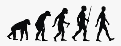 Human evolution.png