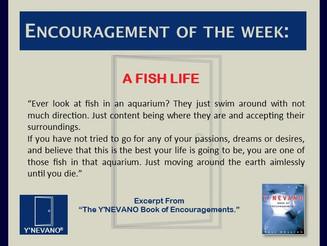 A FISH LIFE