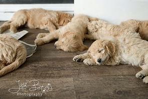 riley puppies sleeping.JPG