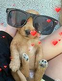molly sunglasses baby.jpeg
