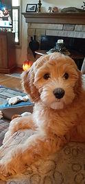 chloe penney pup.jpg