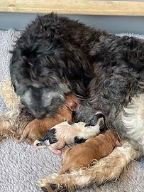 teddys babies.jpg