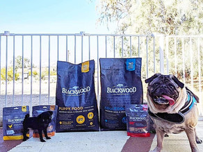 Choosing the right puppy and dog food for your fur babies makes a world of difference!