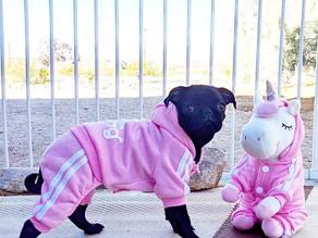 🐶 This Adidog hooded sweatshirt from @petfaitshop is so adorable!!!