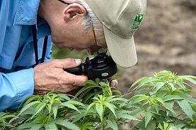 marijuana-consulting 3.jpg