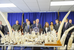 Three ivory dealers arrested in New-York