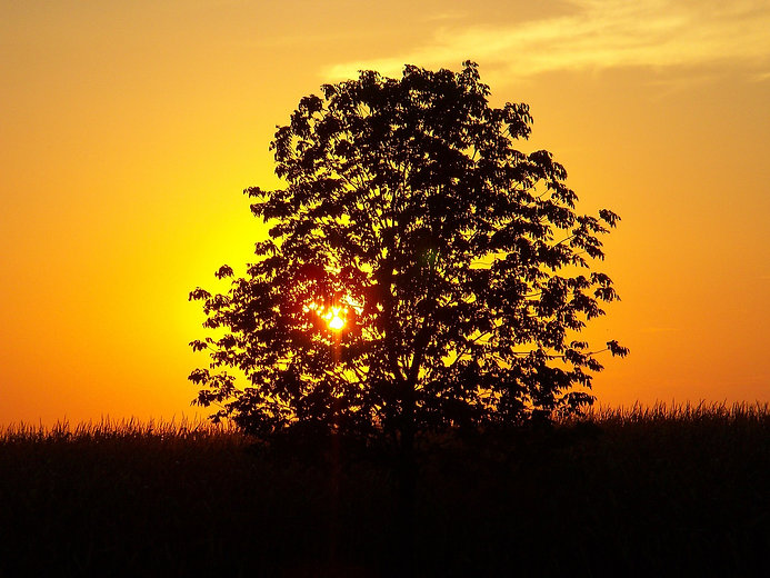 sunset-235574_1280.jpg