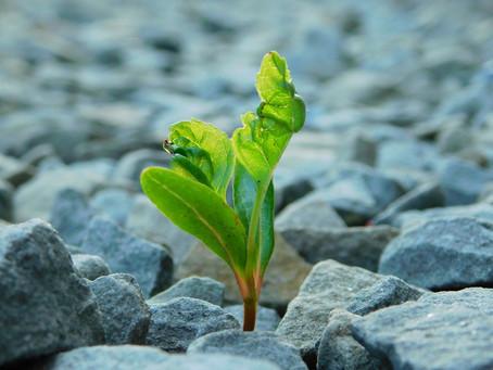 Law of Adversity - Plow Through