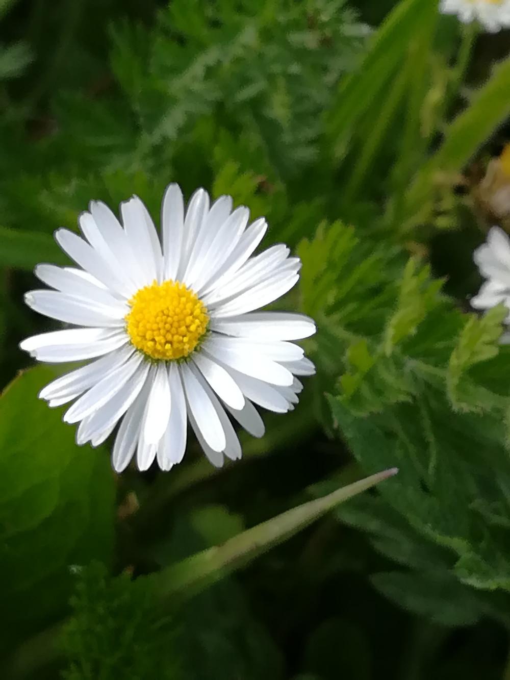 Pour fêter le printemps, les fleurs et nos mamans, il fallait bien un cadeau exceptionnel ! Une relaxation douce des pieds pour marcher en légèreté sur l'herbe verte et fraiche que la Nature nous offre pour nous régénérer ! Un massage délicat pour lui dire que vous l'aimez un peu, beaucoup, à la folie.... 30 minutes de détente entre friction et lissage doux accompagnée d'un infusion indienne pour prolonger cette relaxation... 30 euros pour 45 minutes de bonheur !