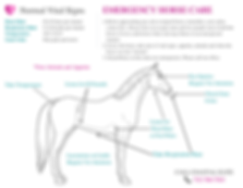 Emergency Horse Care
