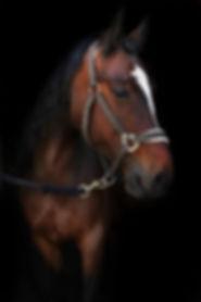 horse pretty .jpg