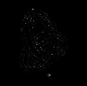 Move_Logo.png