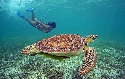 Nado con Tortugas 1.jpg