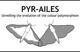 pyr-ailes_logo.jpg