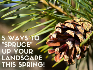 "5 Ways to ""Spruce"" Up Your Landscape This Spring!"