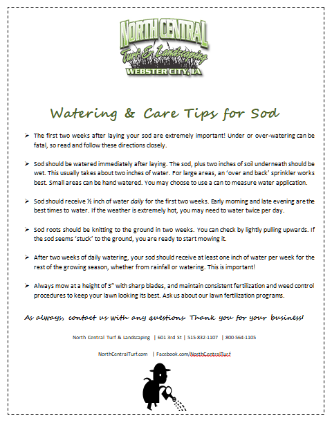 Watering and Care Tips for Sod