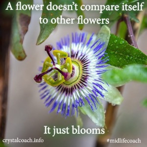 Jezelf vergelijken met anderen, we doen het allemaal.....