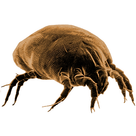 dustmite.png