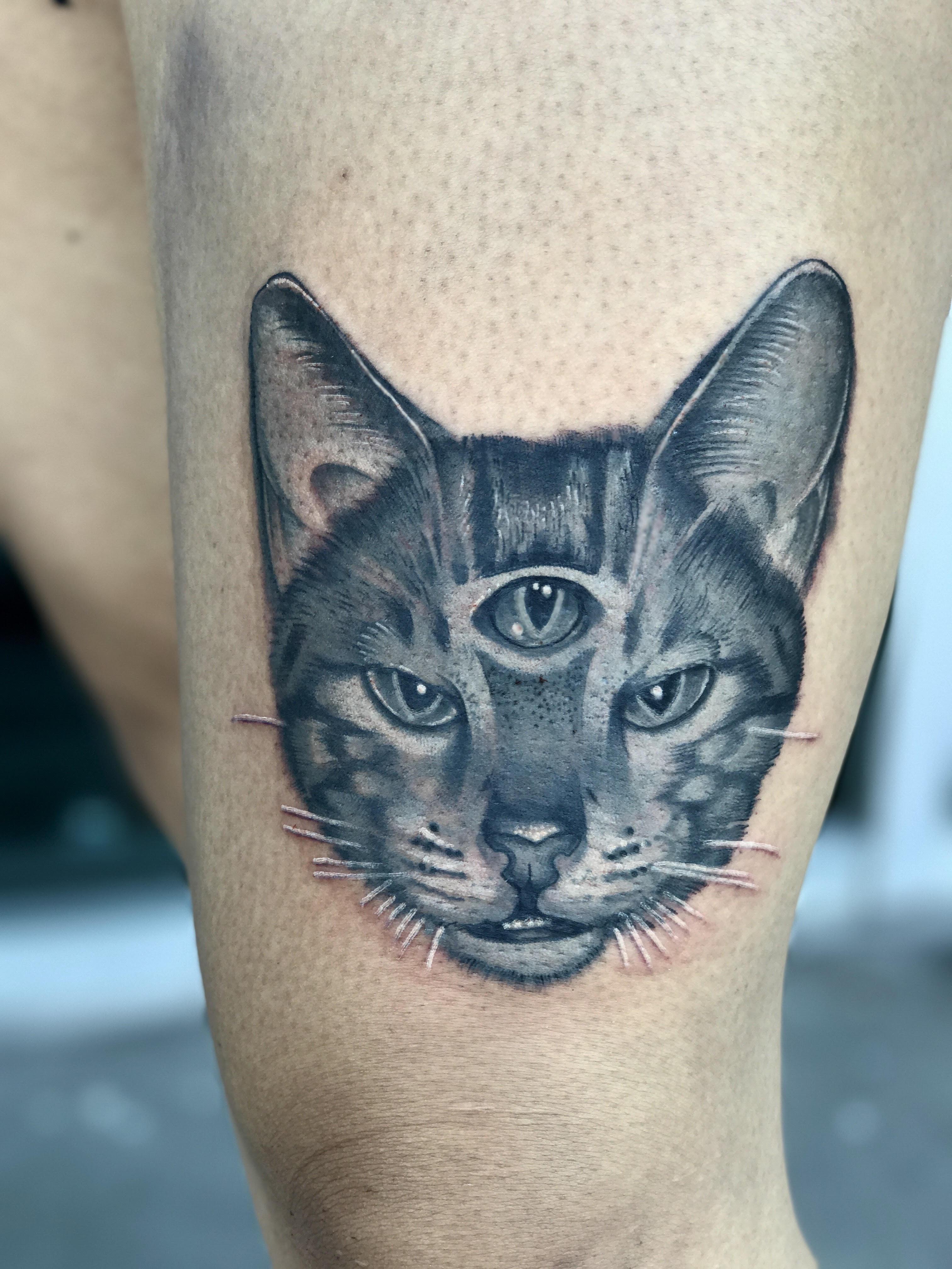3rd eye cat portrait by Krystof