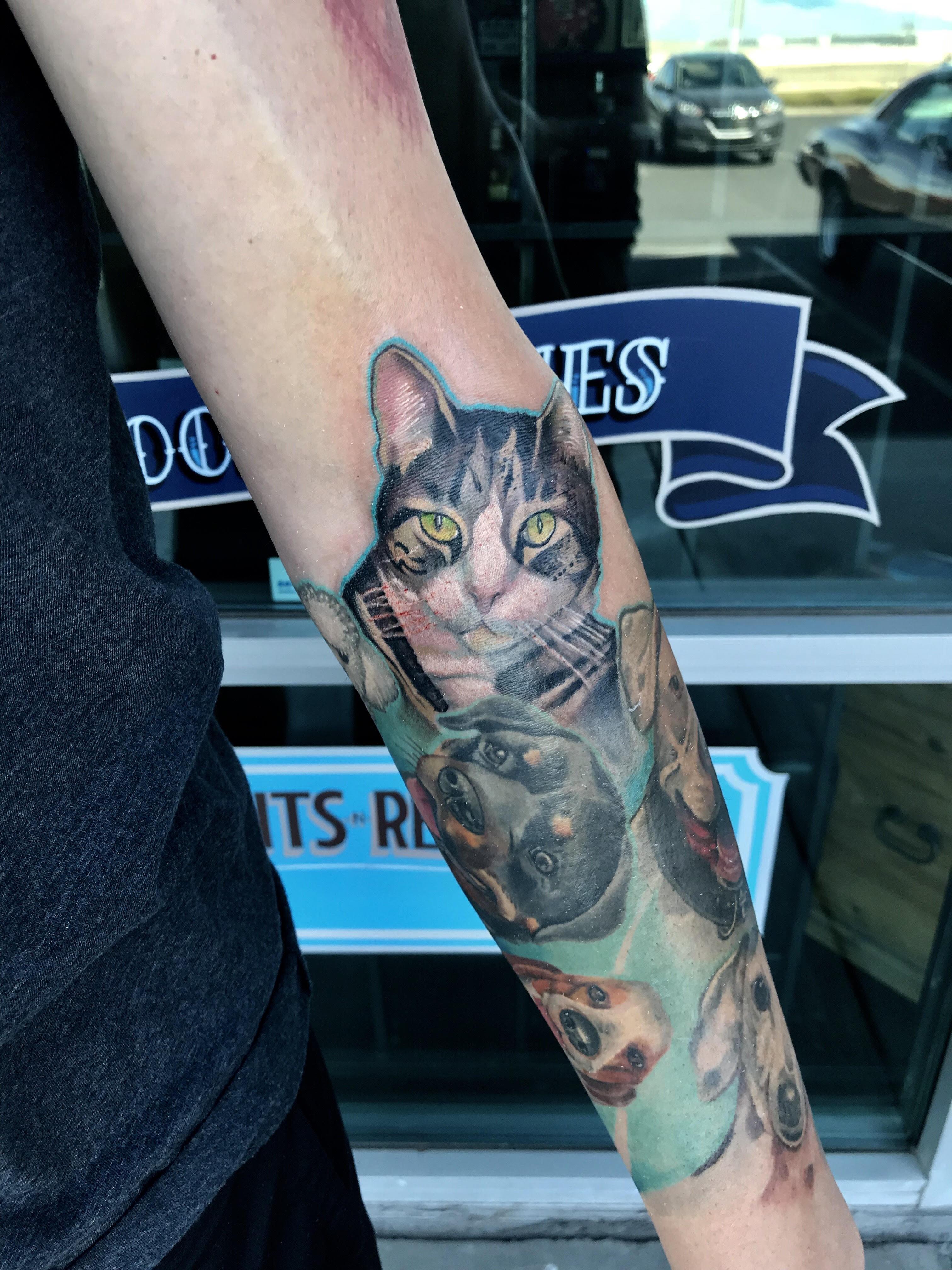 Cat Portrait by Krystof