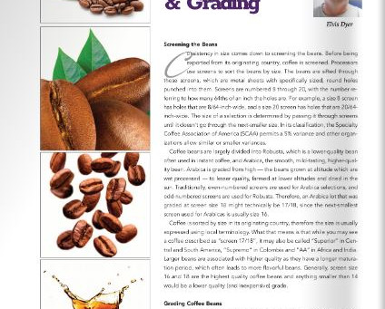 Java Beat: Quality and Grading Coffee Beans