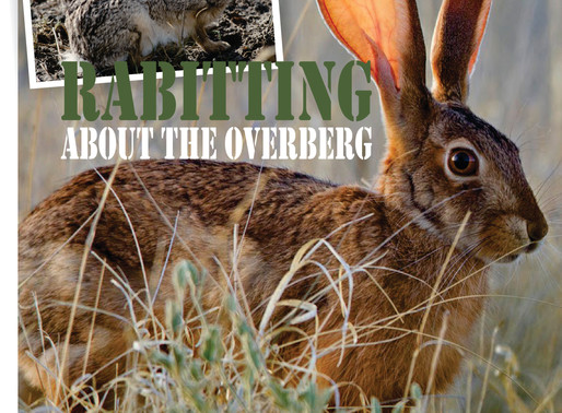Rabitting About the Overberg