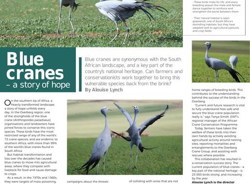 Blue Cranes, A story of Hope...