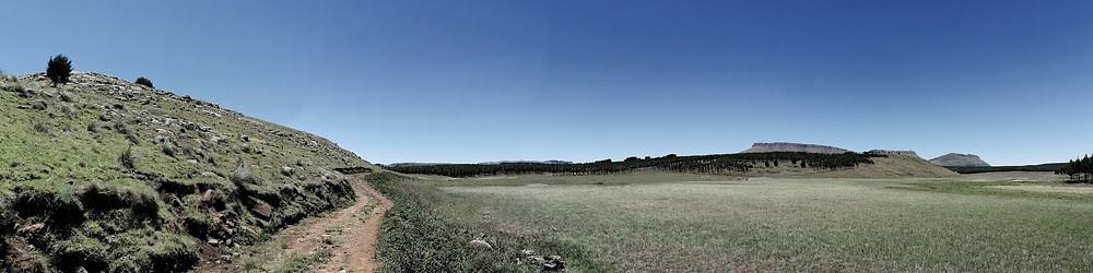 Wetlands between the pine plantations around Hogsback.